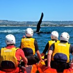 Go Sea Kayak - Whale Watching Byron Bay